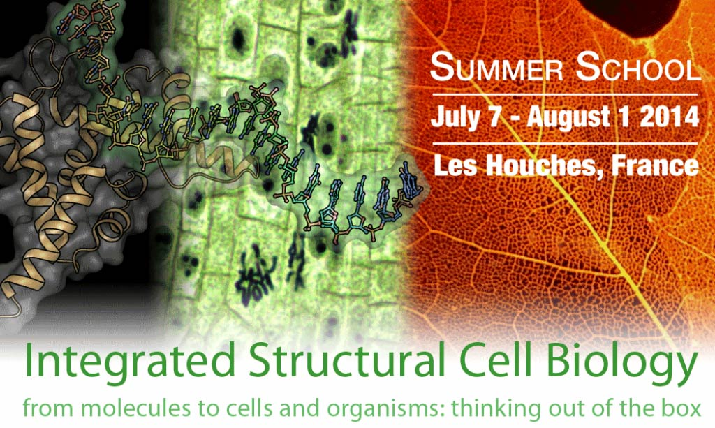Integrated structural and cell biology from molecules to cells and organisms: Thinking out of the box