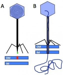 Figure 1 Breyron